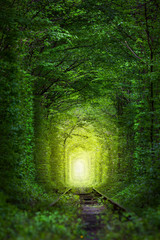 Fantastic Trees - Tunnel of Love with fairy light © Taiga