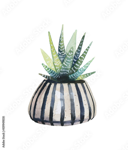 Watercolor succulent in a flowerpot. - 109949858