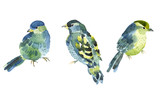 Watercolor bird collection for your design.