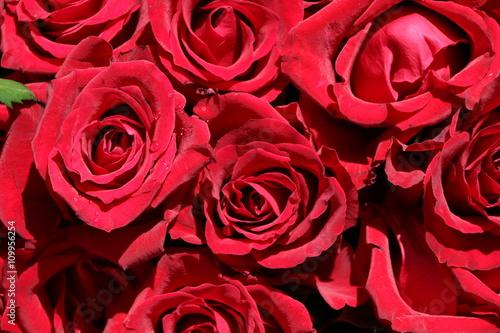 rote rosen als zeichen der liebe hochzeitsstrau stockfotos und lizenzfreie bilder auf. Black Bedroom Furniture Sets. Home Design Ideas