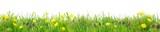 Herrlich schlichte Wildblumenwiese vor Weiß
