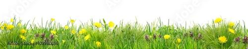 Fototapeta Herrlich schlichte Wildblumenwiese vor Weiß