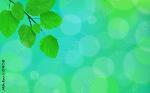 Zdjęcia na płótnie, fototapety, obrazy : Spring leaves