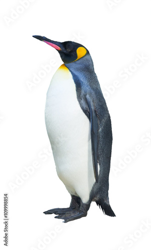 Plexiglas Antarctica Emperor penguins. isolated on white background