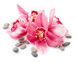 Orchid flowers and stones