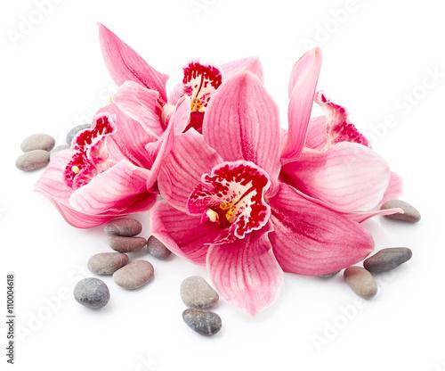 Kwiaty orchidei i kamienie