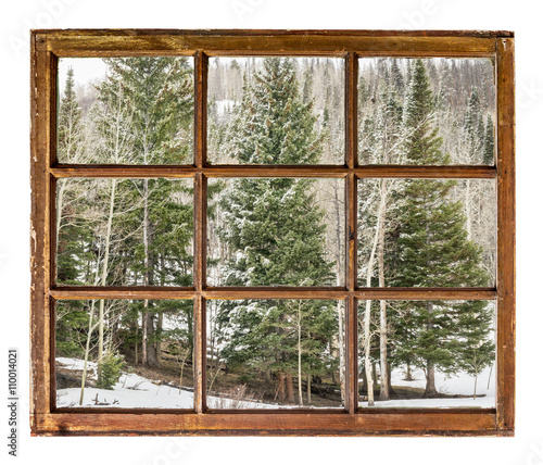 Fototapeta spruce and aspen in winter