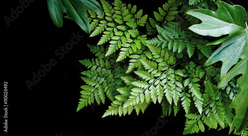 Green leaves on black background, soft focus, tropical forest co
