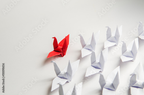 Close up red bird leading among white, Leadership concept. Poster