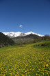 paesaggio di montagna primavera fiori gialli arnica