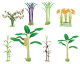 agriculture plant vector design