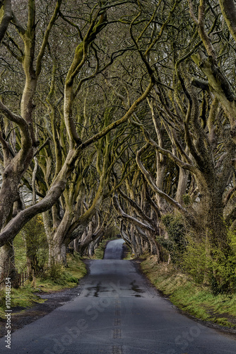 Keuken foto achterwand Noord Europa The Dark Hedges near Ballymoney, Co. Antrim, Northern Ireland, nature