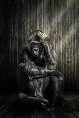 Der Gorilla © Werner Dreblow