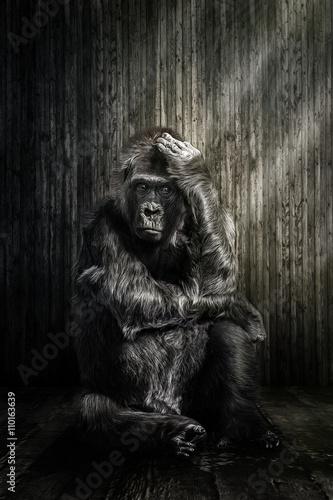 Poster Der Gorilla