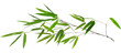 illustration with isolated long green bamboo branch