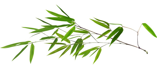 illustration with isolated long green bamboo branch © Alexander Potapov