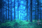 Dreamy blue green foggy forest trees background.
