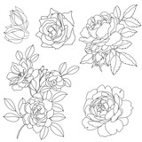 Set of graphical roses, ornament, pattern. Vector.