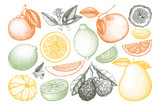 Vintage vector Ink hand drawn collection of citrus fruits isolated on white background. Sketched illustration of highly detailed citrus fruits outlines