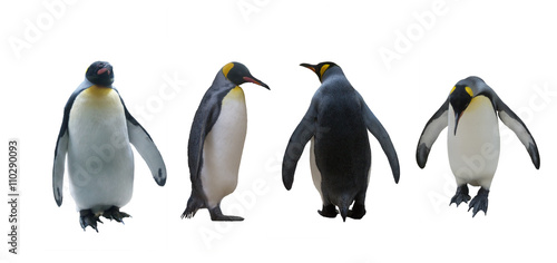 Aluminium Pinguin Set imperial penguins on a white background