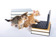 two kittens with laptop computer and books