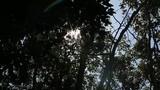 Flare light 3