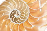 Nautilus shell section texture background