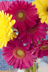 cropped image of pink and yellow daisies.