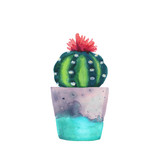 Fototapety Watercolor succulent in a flowerpot. Isolated on a white background. Handdrawn green succulent in pot. Blossom watercolour cactus. Blooming cactus. Flower Illustration.