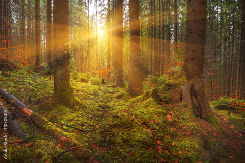 Carpathian dense forest