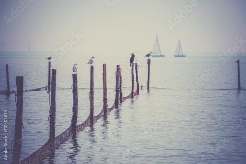 Northern Sea landscape - 110507634