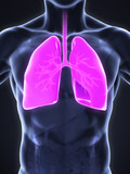Human Respiratory System Illustration. 3D render