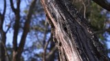 the tree trunk in the forest closeup
