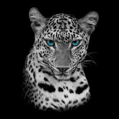 tiger © piyagoon