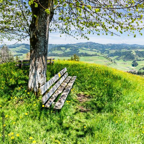 Zdjęcia na płótnie, fototapety, obrazy : schattiges Plätzchen unter der Linde, Emmental, Schweiz