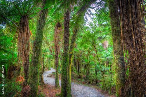 droga-przez-las-deszczowy-3-nowa-zelandia