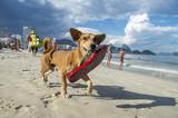 Brazilian dog carrying a red flip flop on the shore of Copacabana Beach in Rio de Janeiro, Brazil