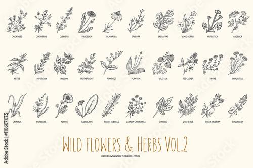 Wild flowers and herbs hand drawn set. Volume 2. Botany. Vintage flowers. Vintage vector illustration.