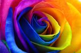 Rainbow rose or happy flower - 110607816