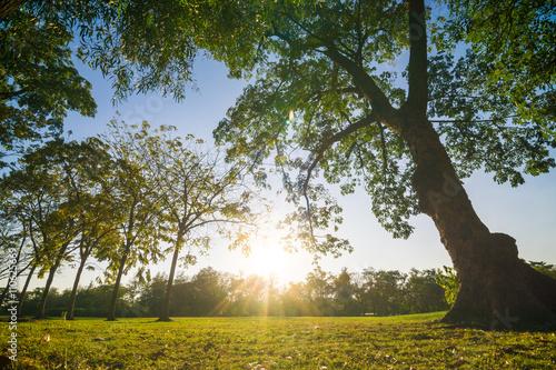 Poster Landschappen Sunset in beautiful park over blue sky