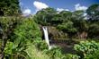 Sunny morning at Rainbow falls near Hilo