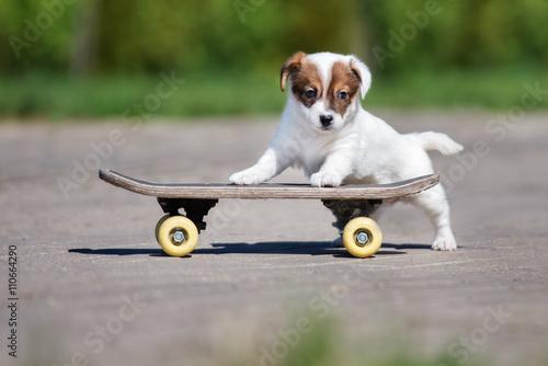 Aluminium Skateboard adorable jack russell terrier puppy on a skateboard