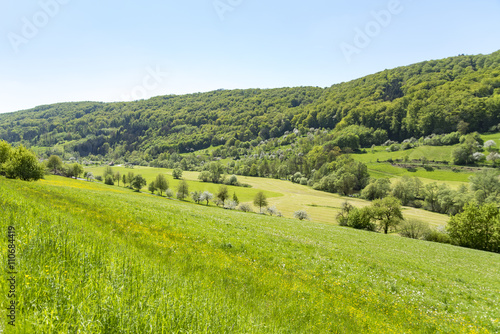 fototapeta na ścianę rural springtime scenery