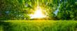 Von Bäumen umgebene Wiese bei Sonnenschein