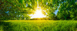 Fototapety Von Bäumen umgebene Wiese bei Sonnenschein