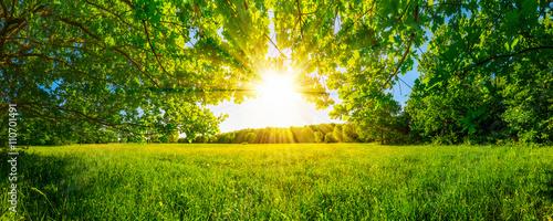 Von Bäumen umgebene Wiese bei Sonnenschein - 110701491