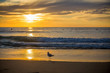 A bird on the beach at sunset with surfers surfing in the ocean.
