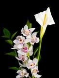 Fototapety calla lily and white cymbidium orchid