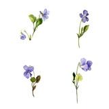 watercolor blue wild flowers - 110708858