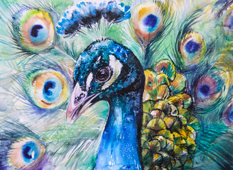 Portrait of peacock.Picture created with watercolors.